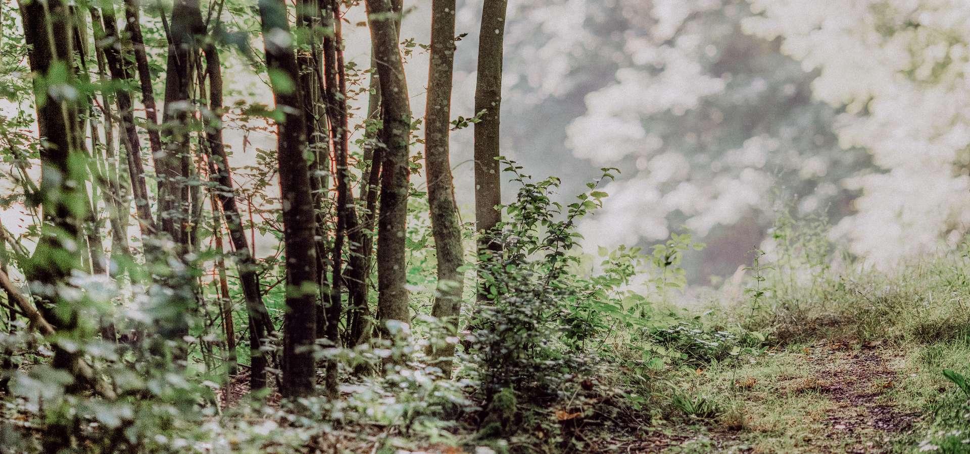 Wieselrundwanderweg 3