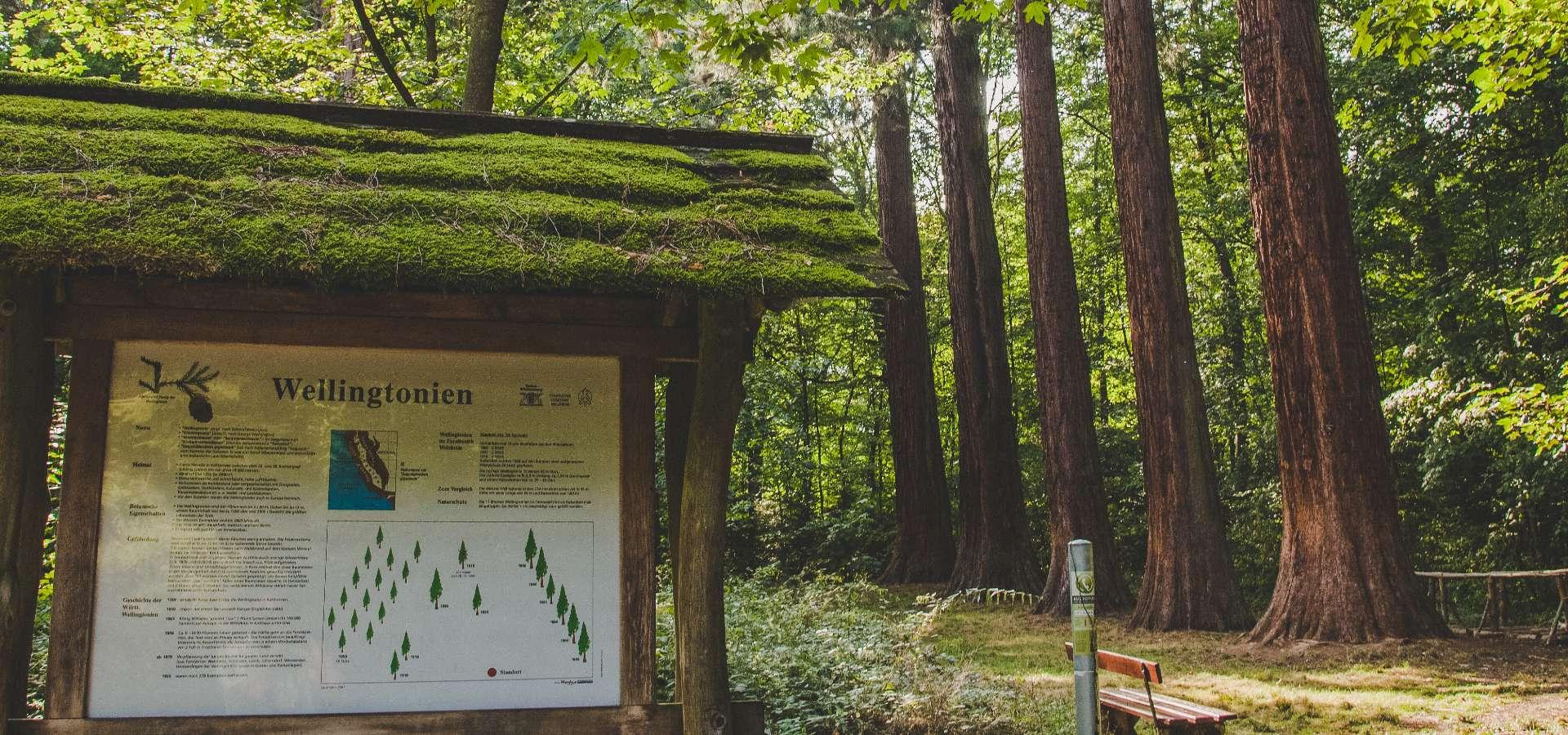 Welzheim und Umgebung - Lang