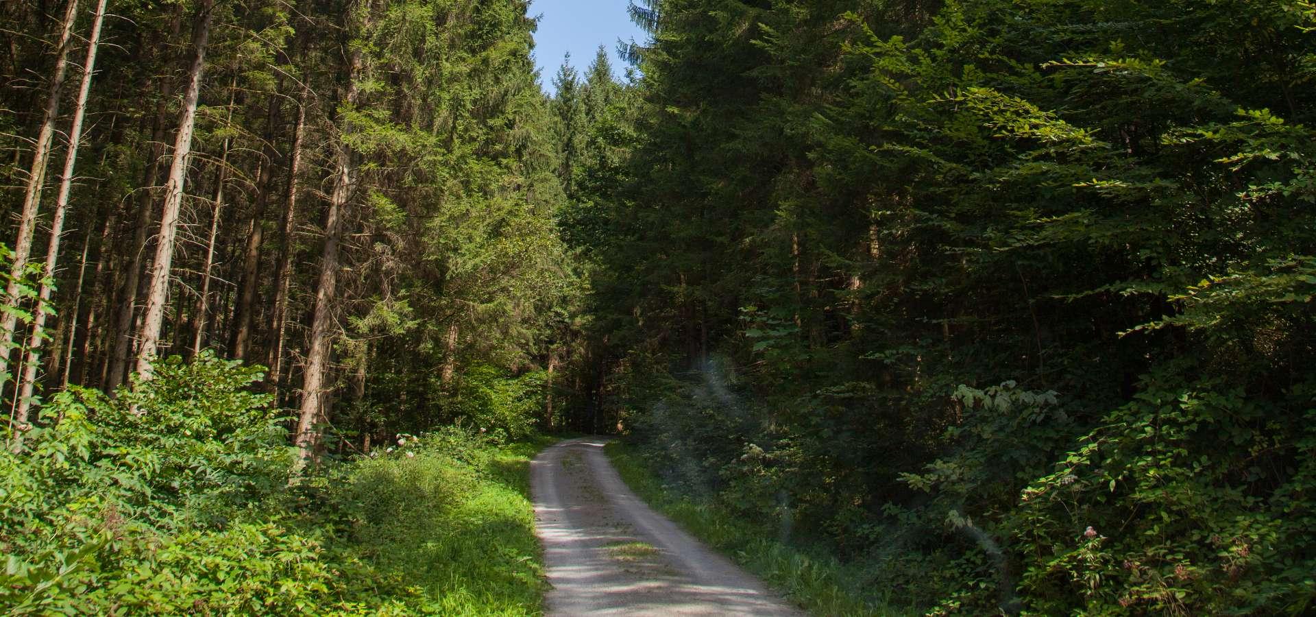 KOMBITOUR - Durch die Räuberwälder