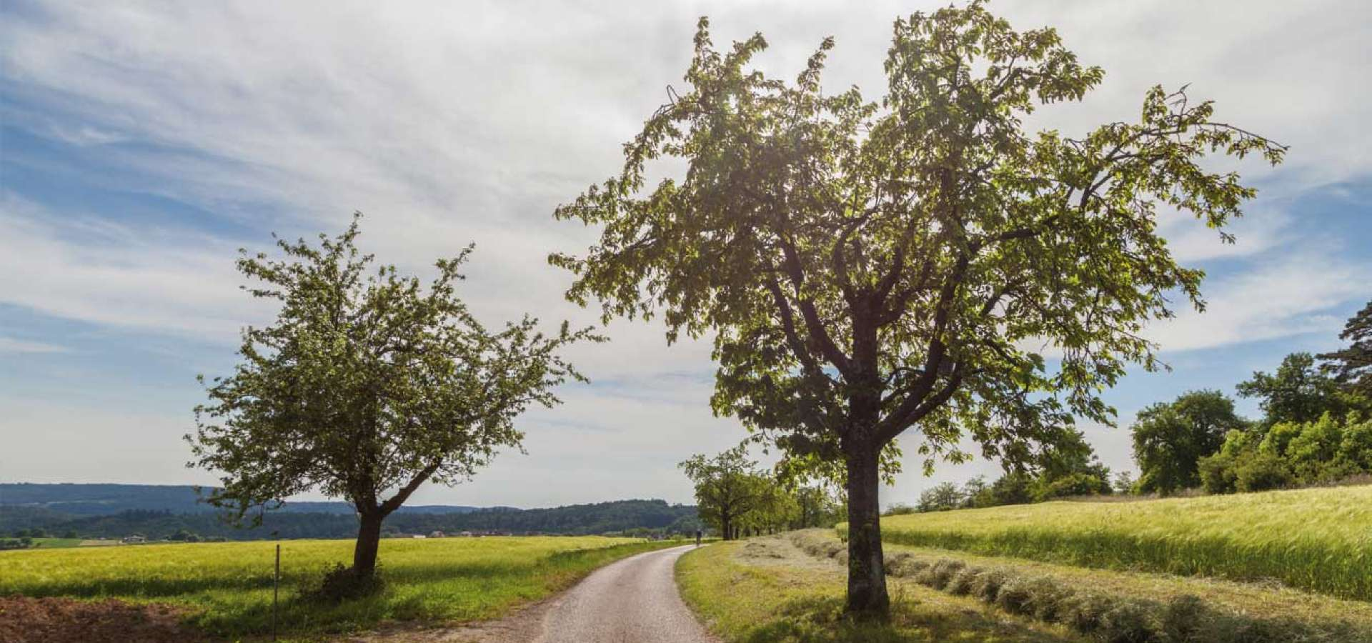 Schwäbischer Wald Weg
